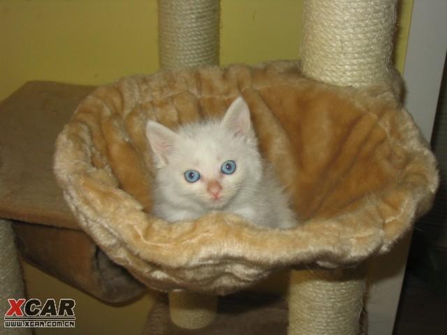 生活习惯非常好   超级粘人   要求领养人:   全家人同意养猫,并