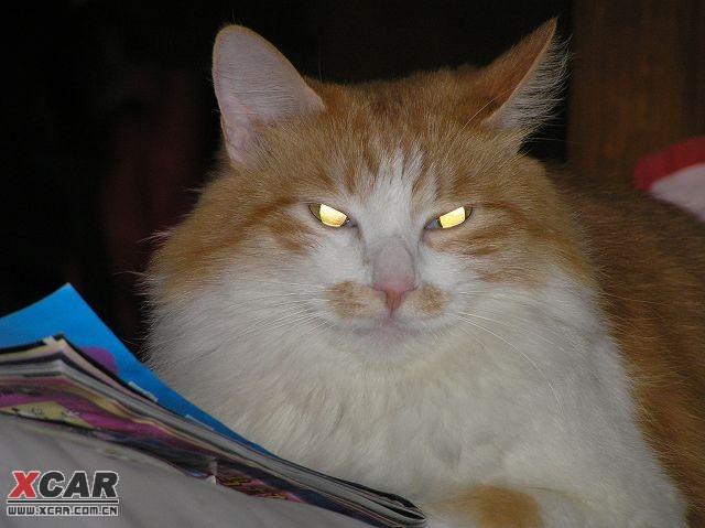 猫的眼睛_猫猫一族吧_百度贴吧