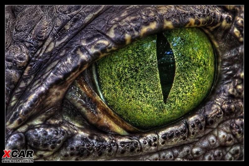 【精华】爱护大自然,爱护野生动物