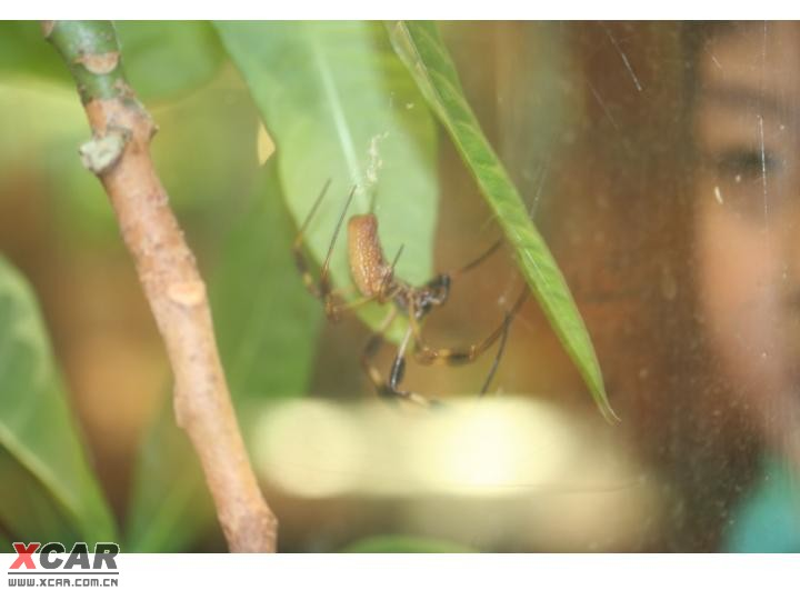 动物园--昆虫馆一览,送几张美国森林公园内平民车!(已全部发完)