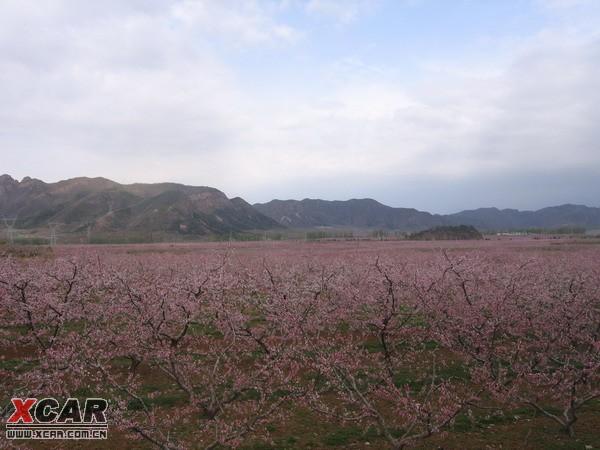 2012年上海桃花节门票交通美食全攻略