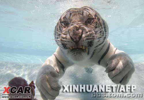 最可怕的水里动物图片