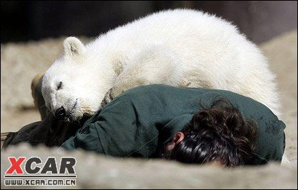 怎么可以如此可爱(德国柏林动物园的可爱小北极熊-史努特)