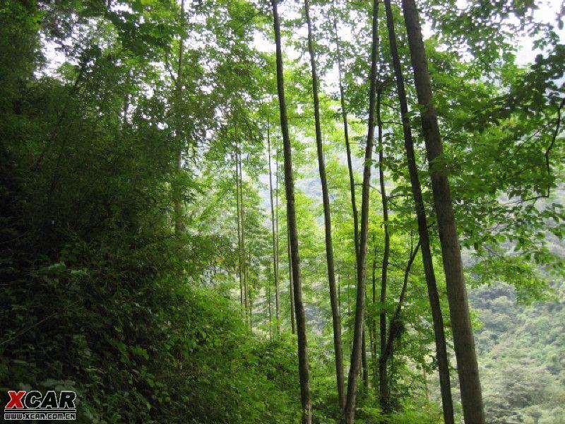 壁纸 风景 森林 植物 桌面 800_600