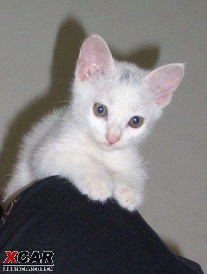 家养宠物猫新生小宝贝,可爱得!谁想领养吗?
