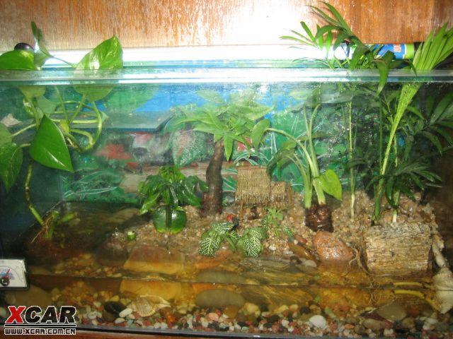己DIY的两栖生态缸,给大伙养养眼
