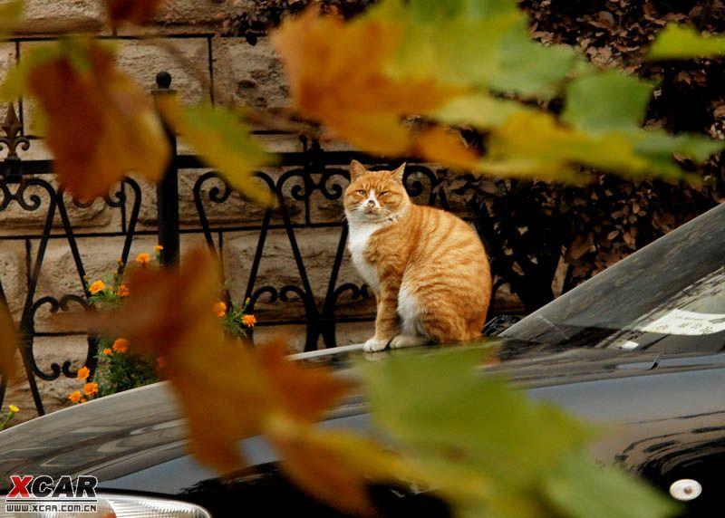 梧桐树下的猫_robsiqi