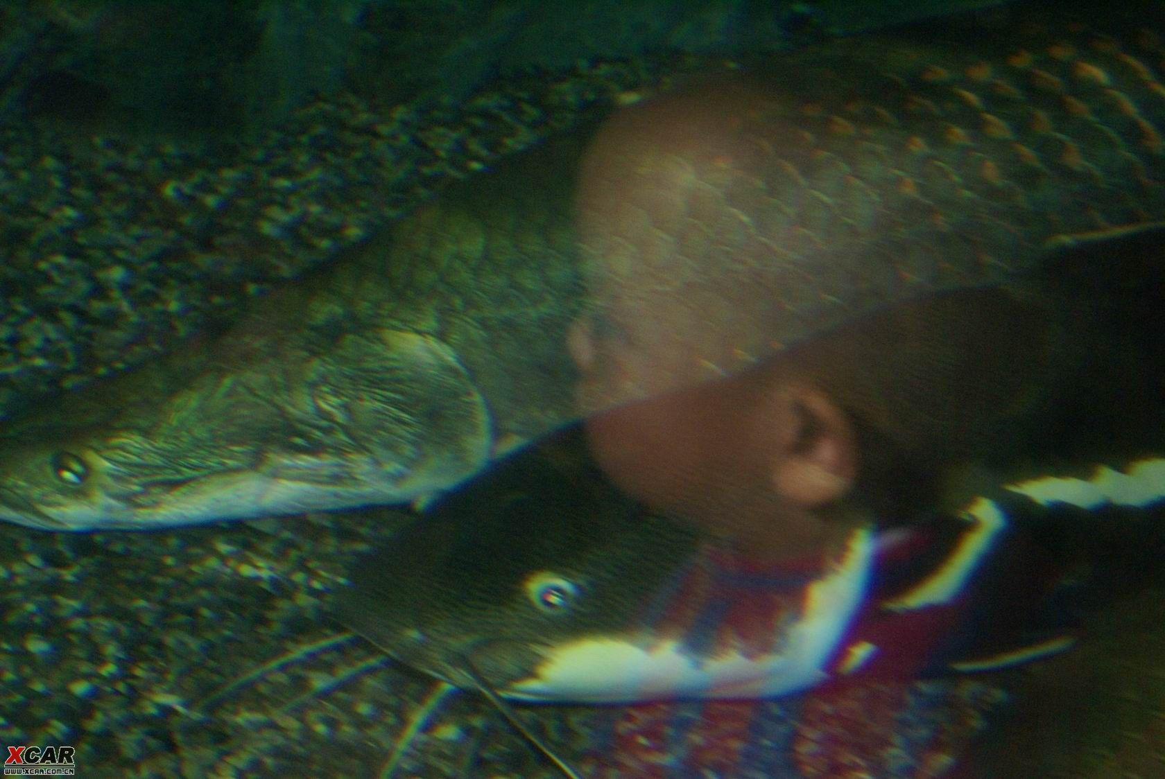 壁纸 动物 海底 海底世界 海洋馆 水族馆 鱼 鱼类 1680_1124