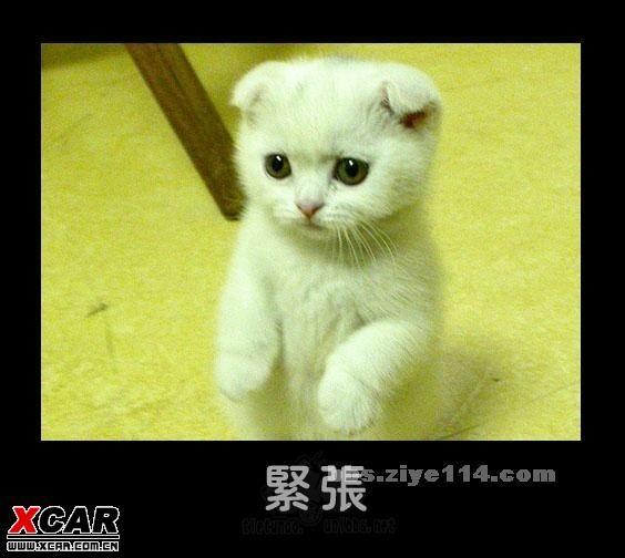 可爱的猫猫狗狗的拟人表情