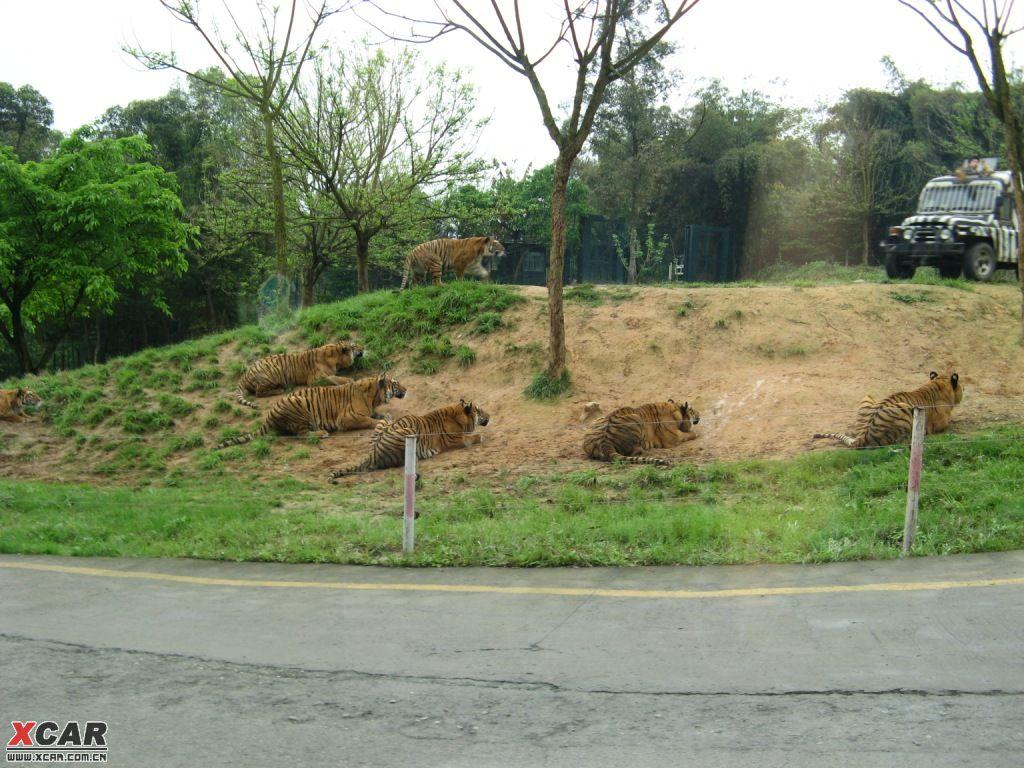 上周去了永川野生动物园