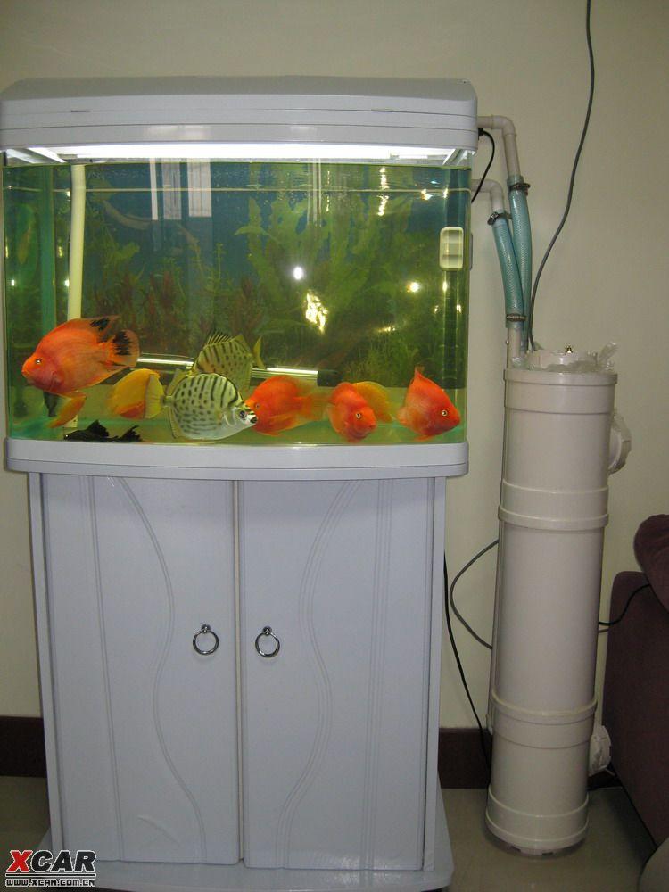 刚刚diy的鱼缸过滤桶,请同学们点评!