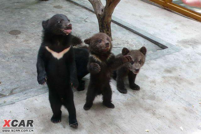 【精华】长隆野生动物园攻略