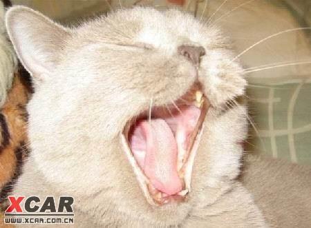 动物们犯困时的可爱表情精华