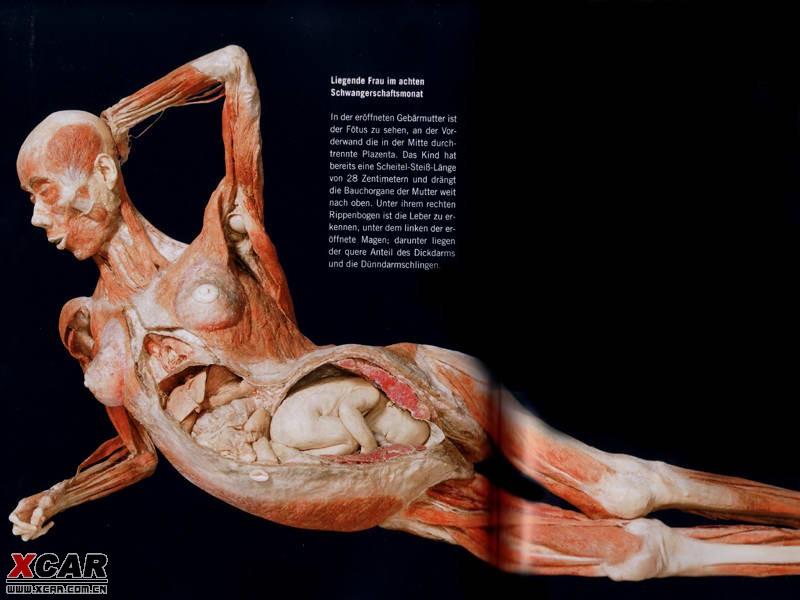 怀孕的女性 腹腔容积迅速增大