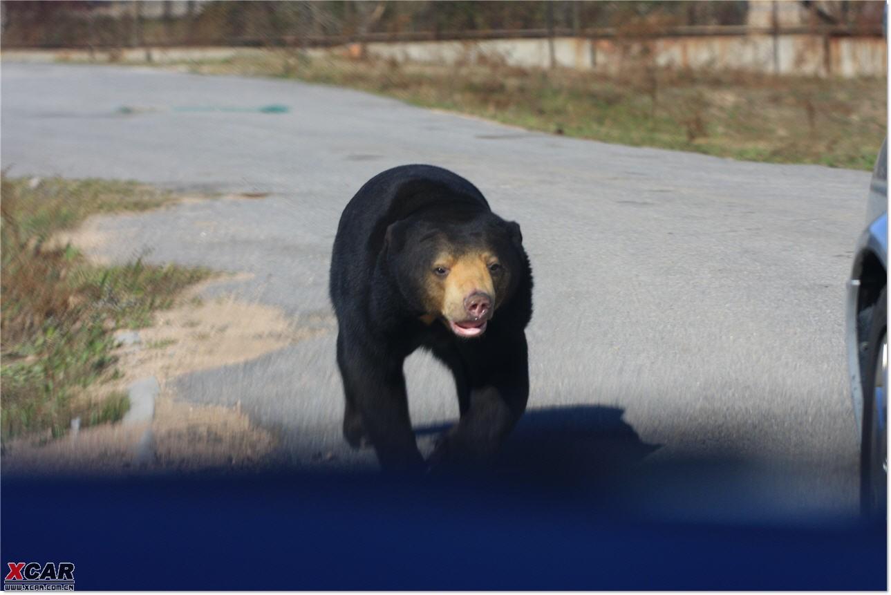 八达岭野生动物园 之 马来熊专辑 (被拔了车窗过来招领)