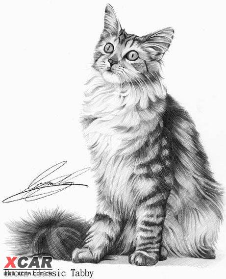 铅笔画小猫图片大全可爱