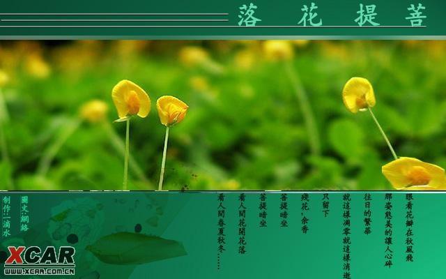 【精华】菩提花落_恋爱物语