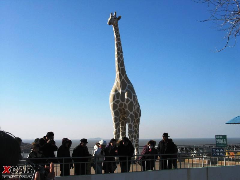野生动物园(超多图片)