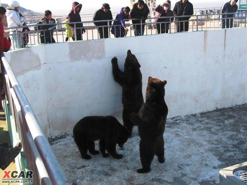 大年初一逛西霞口野生动物园(超多图片)