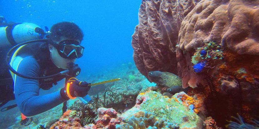 一个潜水菜鸟的PG岛之旅