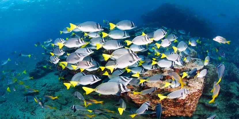 终极体验 畅游加拉帕戈斯群岛