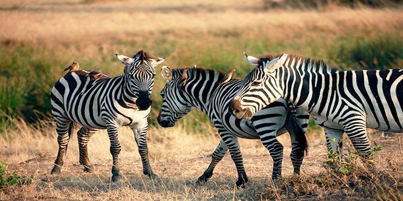 亲近自然 东非野生动物奇幻之旅