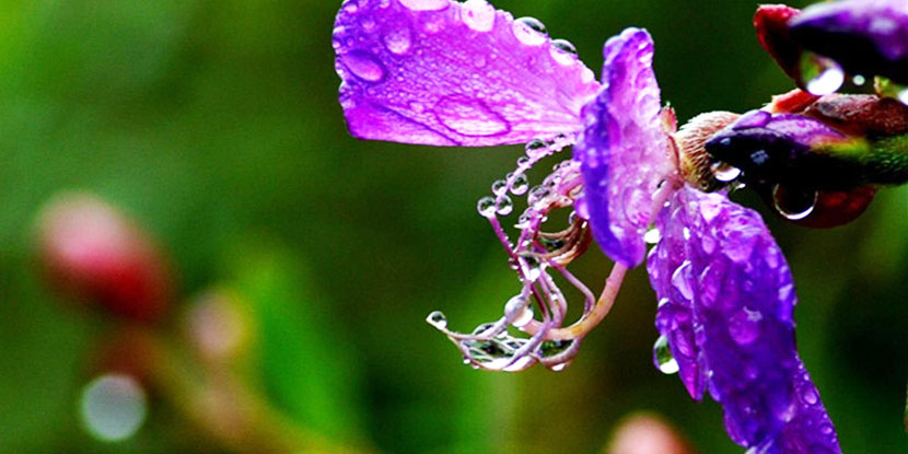 【迎春季】在春雨中快乐乡村行