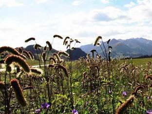 痛下决心实现新疆之旅 自驾天山看美景