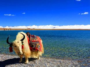 种种问题终圆梦没有霸道却跟团去了西藏