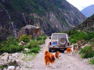 一部老车和两只狗随行 自驾丙察察之旅