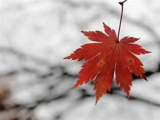 看红叶和红海滩国庆七天赏秋景