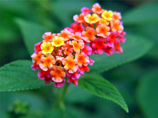 花朵盛开带来好心情