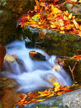 静看绿石谷山涧流水