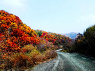 本溪红叶层林尽染