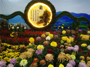 观看世博园菊花展