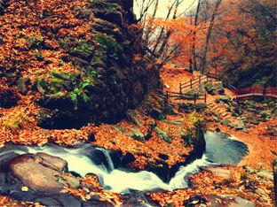 关门山峡谷红枫似火