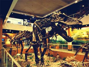 与恐龙化石亲密接触