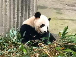 走进大熊猫的故乡