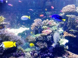 欢度假期 畅玩新加坡海底世界