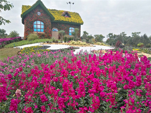 广州已被鲜花所包围