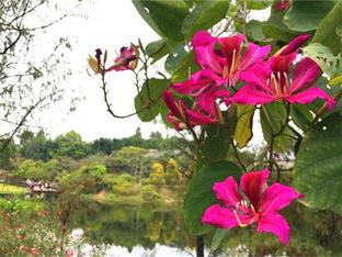 海珠湿地公园美如画