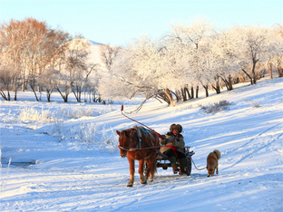 雪域圣地 在坝上草原尽情撒欢
