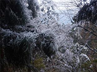 看衡山雪淞晶莹剔透
