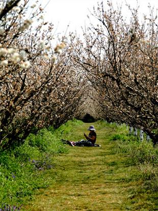 感蓝莓庄园春天气息