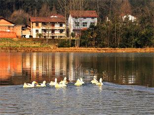 探访神秘小村 陕南汉中的春天尽是美景