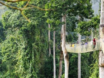 神秘莫测 寻热带雨林秘境之旅