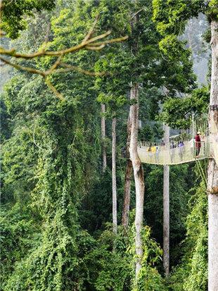 寻热带雨林秘境深处