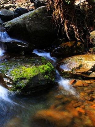 原始森林的真实写照