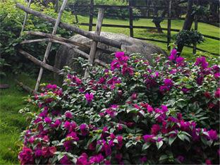 枝叶繁茂 访西双版纳热带雨林