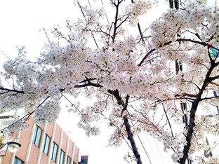 春夏秋冬 领略首尔四季的变换